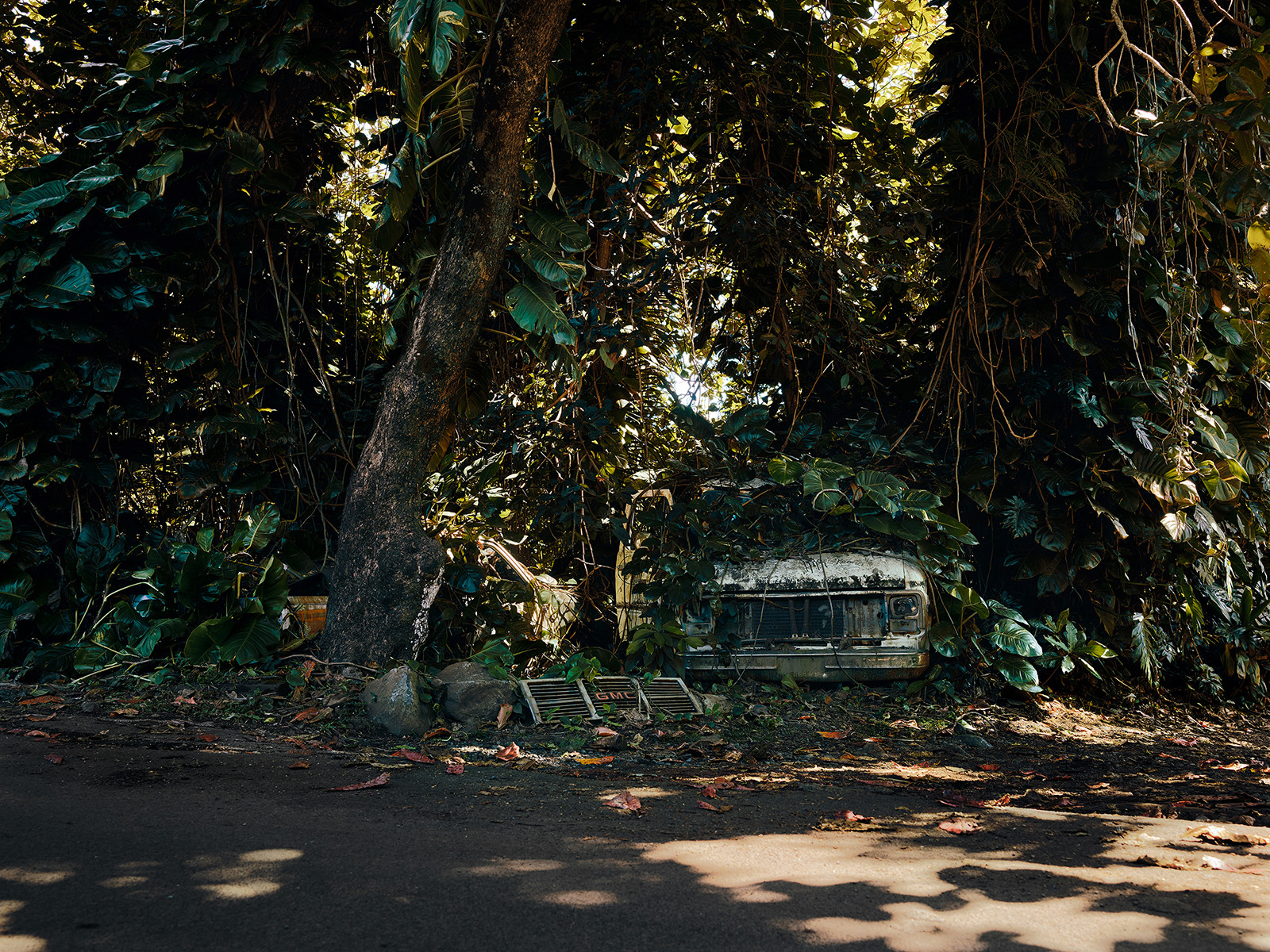 Jungle Cars of Maui personal work 9 by Thomas STROGALSKI