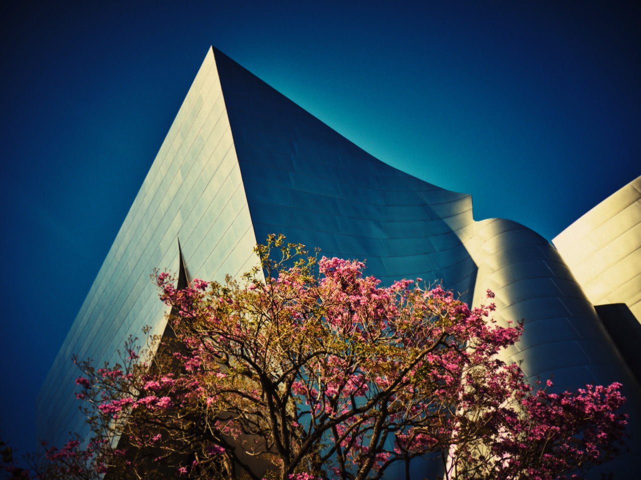 Los Angeles...of plants and steel 4 by Benjamin PICHELMANN